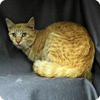 Adopt A Pet :: Arnold - Herndon, VA