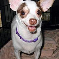 Adopt A Pet :: Minnie - Killian, LA