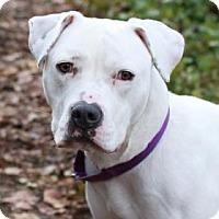 Adopt A Pet :: Lovely LuLu - Issaquah, WA