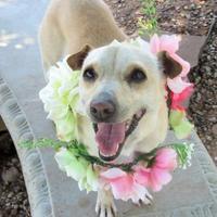 Adopt A Pet :: Lena - Wichita Falls, TX