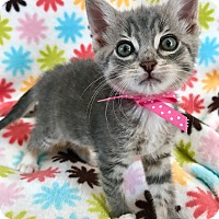 Adopt A Pet :: Serena - Montclair, CA