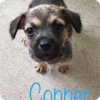 Adopt A Pet :: Copper - Marlton, NJ