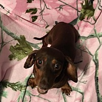 Adopt A Pet :: EMMY - WOODSFIELD, OH