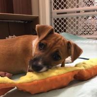 Adopt A Pet :: Kittatinny - West Allis, WI