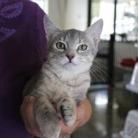 Adopt A Pet :: Chenille - Brunswick, GA