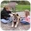 Photo 3 - Akita Dog for adoption in Chicago, Illinois - Keno