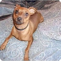 Adopt A Pet :: Copper - Phoenix, AZ