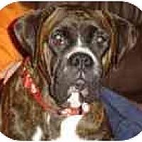 Adopt A Pet :: Bella - Thomasville, GA