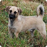 Adopt A Pet :: Larry - Albany, NY