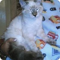 Adopt A Pet :: K-Ellie2-Lark - Colorado Springs, CO