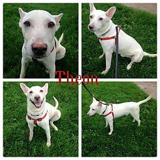 German Shepherd Dog/Terrier (Unknown Type, Medium) Mix Dog for adoption in Garden City, Michigan - Theon