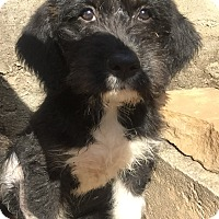 Adopt A Pet :: Sabastain - Smyrna, GA