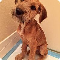 Adopt A Pet :: Hewitt - West Warwick, RI