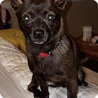 Adopt A Pet :: Stuart - Gainesville, GA