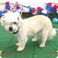 Adopt A Pet :: DOG see also SCOOBY - Marietta, GA