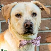Adopt A Pet :: Gonzo - Savannah, GA