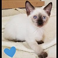 Adopt A Pet :: Sumatra (KJ) 5/20/17 - Orlando, FL