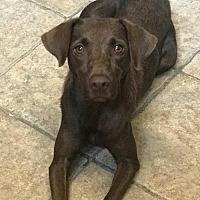 Adopt A Pet :: Avalon - Houston, TX