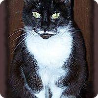 Adopt A Pet :: Lola - Brookville, IN