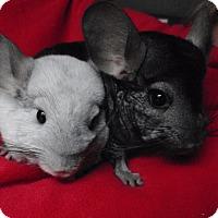 Adopt A Pet :: Jax & Telller - Virginia Beach, VA