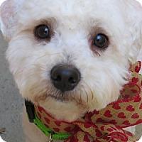 Adopt A Pet :: Darby - La Costa, CA