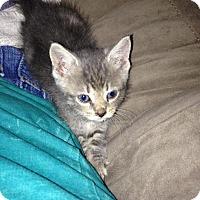 Adopt A Pet :: Duncan - Port Republic, MD