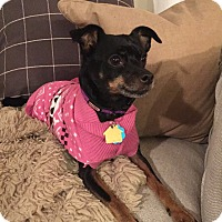 Adopt A Pet :: Lexus - Nashville, TN