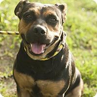 Adopt A Pet :: Keylin - hollywood, FL