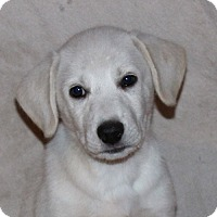 Adopt A Pet :: Flynn - PENDING - in Maine - kennebunkport, ME