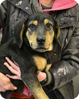 Hound (Unknown Type) Mix Dog for adoption in Beacon, New York - Frank