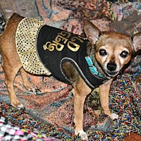 Adopt A Pet :: Annie - Melrose, FL
