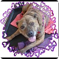 Adopt A Pet :: Diamond 1 - Las Vegas, NV