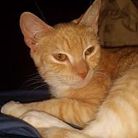 Adopt A Pet :: Pear - Orlando-Kissimmee, FL
