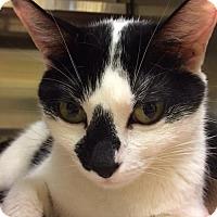 Adopt A Pet :: Bogart (TAS #7) - Trenton, NJ