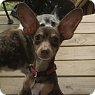 Adopt A Pet :: Rambo