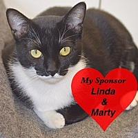 Adopt A Pet :: Domino - San Leon, TX