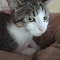 Adopt A Pet :: Olivia - South Saint Paul, MN