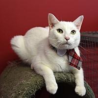 Adopt A Pet :: Wally - Winchendon, MA