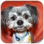 Photo 1 - Shih Tzu/Terrier (Unknown Type, Small) Mix Dog for adoption in Bellflower, California - Virgil