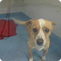 Adopt A Pet :: Rocky - Gainesville, FL