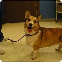 Adopt A Pet :: Truman - Inola, OK