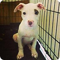 Adopt A Pet :: Lucy - Clarksburg, MD