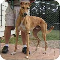 Adopt A Pet :: Rover - Oak Ridge, NC