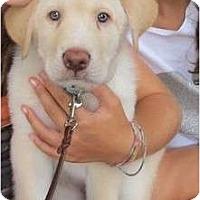 Adopt A Pet :: Rumple - Madison, WI