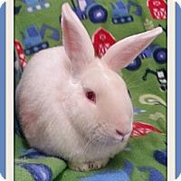 Adopt A Pet :: Hagrid - Williston, FL