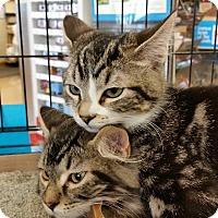 Adopt A Pet :: Bonnie - Walla Walla, WA