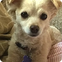 Adopt A Pet :: Riesling-1y sweet puppy - Los Angeles, CA