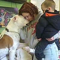 American Bulldog Mix Dog for adoption in Middletown, New York - Rocky