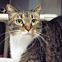 Adopt A Pet :: Chloe - Grants Pass, OR