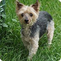 Adopt A Pet :: KG - Port Clinton, OH